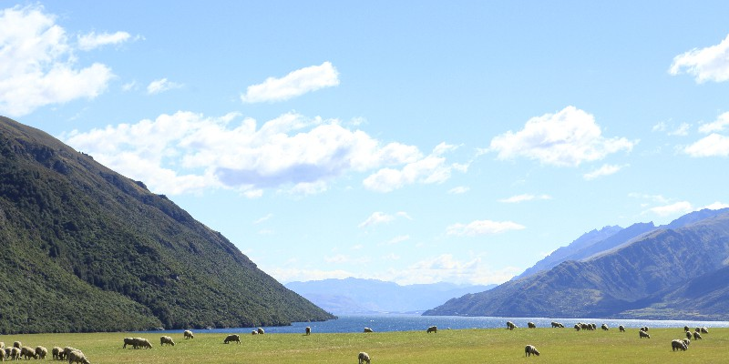 NZ | FROM THE WEST TO THE EAST